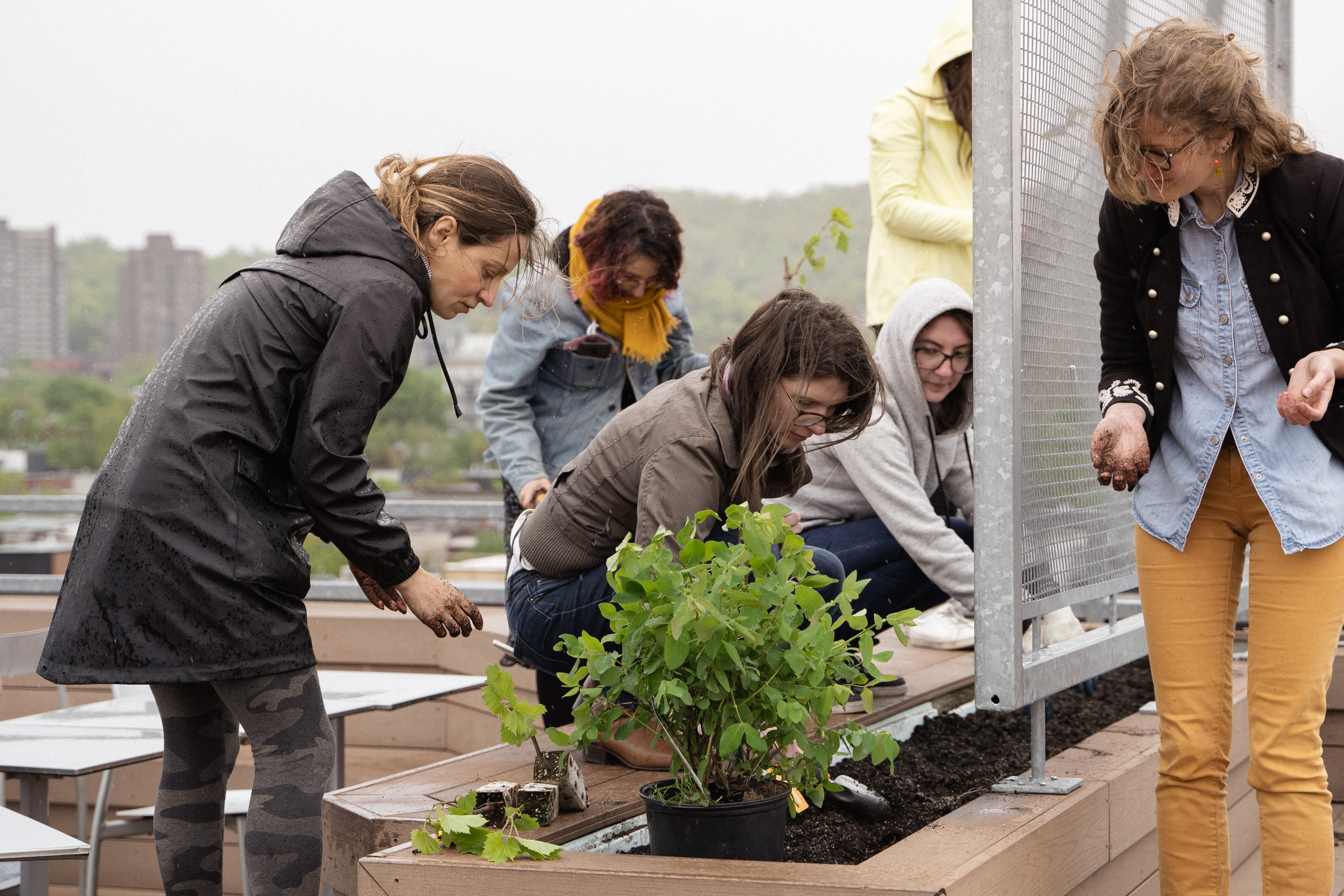 Ubisoft Montreal welcomes an urban vineyard on its rooftop